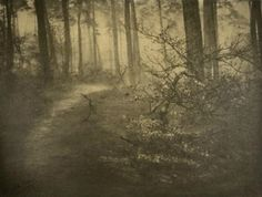 Adriaan Boer (1875-1940) - Path in the forest, nd - .