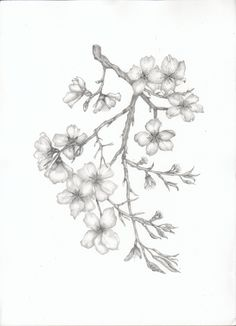 Almond Blossom Branch