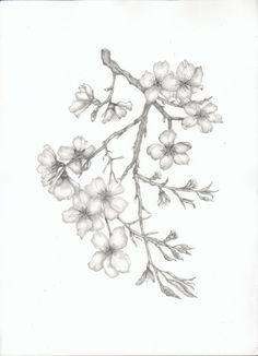 Almond Blossom Branch