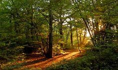 Highgate Woods