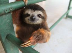 also a freaking adorable sloth!