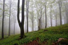 beech, canon eos 7d, forest, green, kullaberg, kullen, mist, sigma1020mmf456exdchsm, skåne, spring, sverige, sweden, trees, woods