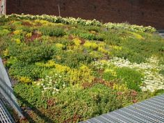 Sedum, Summer 2009 xeriscaping is amazing. What a great way to enjoy plant life and not have to water very often, if at all.xeriscaping is amazing. What a great way to enjoy plant life and not have to water very often, if at all. Roof Plants, House Plants, Sedum Roof, Living Roofs, Living Walls, Roof Architecture, Residential Architecture, Contemporary Architecture, Xeriscaping