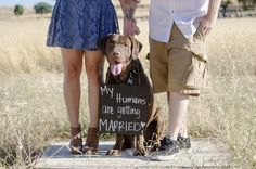 """There is nothing like the prop of a chocolate labrador dog to create your safe the date notice.  We used the chalk board in a number of images.  """"My humans are getting Married"""" was such a cute message. 