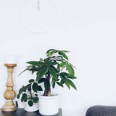 "Neues Pflänzchen... Kommentar des Mannes: ""Bauen wir jetzt Hanf an?""  . . A new plant for my green gang... . . . #urbanjunglebloggers #plants #myplants #gogreen #plantgang #plantsofinstagram #shelfie #expressmyshelf #homedecor #tv_living #wood #wooden #shelf #diy #doityourself #wallarthanging #wallart #walldecor #wallhanging"