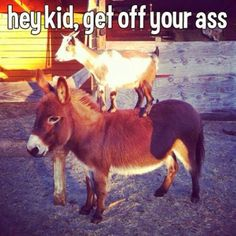 Hey kid, get off your ass. #bad #puns