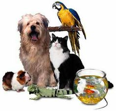 Small Business Ideas List Of Small Business Ideas How To Start A Pet Business