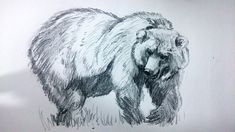 Drawings to Draw | How to Draw a Bear with Pencil Step By Step