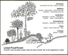 Hugelkultured Swale with Linear Food Forest Cross Section 640pix Pictures From our June 2012, Stelle PDC Course