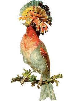 Victorian bird image -  Free Printable: