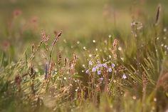 poranna rosa na trawie - Szukaj w Google