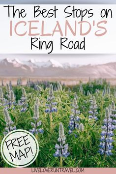 The perfect 6 day Iceland itinerary for a Ring Road road trip. #iceland | #ringroad | top things to do in Iceland | Iceland travel | Iceland itinerary | Iceland things to do in | Iceland travel summer | Iceland summer itinerary | 6 days in Iceland | one week in Iceland | Iceland one week itinerary | Iceland in 6 days | Iceland Ring Road itinerary | Iceland travel tips | Iceland travel guide | best photo locations in Iceland | what to do in Iceland | Iceland road trip itinerary Iceland Travel Tips, Iceland Road Trip, Europe Travel Guide, Travel Guides, Travel Destinations, Travel Plan, Travel Goals, Iceland Waterfalls, Road Trip Hacks