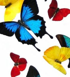 Butterfly People- real butterfly's encased in acrylic frames.  Beautiful!
