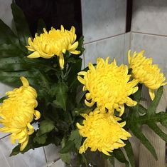 Of Sundays and beautiful yellow chrysanthemums . Yellow Chrysanthemum, Chrysanthemums, Flower Fashion, Earth, Flowers, Plants, Beautiful, Instagram, Floral Fashion