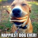Dog with Cheeseburger
