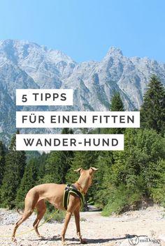 5 Tipps, mit denen Du Deinen Hund für's Wandern fit machst.