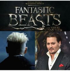 Johnny Depp will interpret gellert grindelwald in 'fantastic beasts and where to find them' The news comes from the round table with the cast and crew of amazing animals, the director David Yates and the producer David Heyman. Gellert Grindelwald is considered one of the most powerful dark wizard of all time, second only to maybe tom marvolo riddle, who later became known as Lord Voldemort. Attended the durmstrang institute until his expulsion. Following Coltivò friendship with albus…