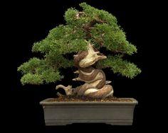 Juniperus cinensis bonsai Bonsai Garden, Garden Trees, Bonsai Trees, Juniper Bonsai, Potpourri, Garden Sculpture, Flora, Statue, Illustration