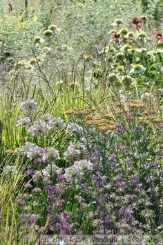 Salvia Purple Rain, Achillea Walther Funke, Allium Summer Beauty, Sesleria Autumnalis, Echinacea Coconut Lime, Calamintha nepeta, Molinia Transparent.  Adam Woodruff, garden designer.
