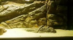 #tabalkonmalawi #tabalkonaqua #tanganyikatank #cihclids #aquarium #akvaryumfon #akvaryum #tasarım #tanganyika #aquascape #aqua #fishporn #fishing #handmade #handscaping #elişi #dizayn #evdizayn #tasarım #interiordecoration #malawicichlids #malawifon #freshwater #freshwateraquarium #customaquariums #custombackground #bigaquarium #decoration #bigfishtank #dekorasyon