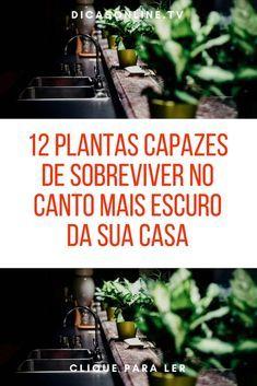 Plantas para lugares escuros, plantas que não precisam de sol | 12 plantas capazes de sobreviver no canto mais escuro da sua casa | Não bate sol na sua casa? Isso não é desculpa para não criar um pequeno jardim! | Elas não precisam da luz do sol ou de muitos cuidados.