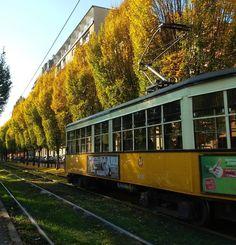 Milano e l'autunno #milano #milan #city #città #visitmilano #milanodavedere #labellaitalia #tram #33 #binari #autunno #autumn #november #alberi #picoftheday #yellow #colorful #pacedeisensi #peaceful #saturday #atm #atmosphere #beautifulday by andreapiras89