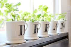 Tiny Windowsill Plants You Will Love To Have In Your Home - Top Dreamer