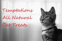 Have you ever seen a Temptations cat treat commercial? These ads show someone shaking a bag of treats, followed by …