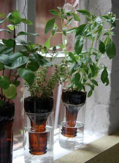 Bottle gardens: how to. A no-fuss recycled windowsill herb garden. Self-watering planters like these aren't a new idea. This version looks nice & works great for small herbs and plants. Empty beer bottles or make a larger garden with wine bottles. More Container Gardening http://pinterest.com/wineinajug/container-gardening/