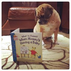 50 Adorable Dogs Who Shared Their Family's #Pregnancy News In The Best Way http://huff.to/1GLQgRF
