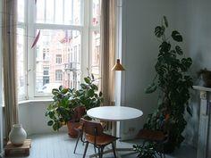 openhouse-magazine-my-favourite-plant-monstera-deliciosa 3