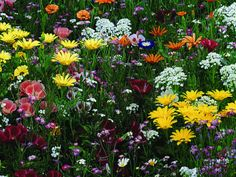 spring flowers | Completing an Art in Nature Flower Bulbs Fundraiser is as easy as 1,2 ...