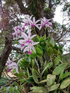 Orquídeas - casa 26