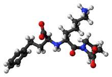 standard amoxicillin dose strep throat