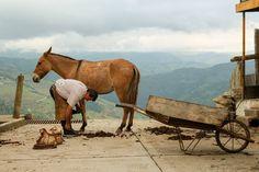 Horses, Board, Animals, Cities, Artists, Animales, Animaux, Animal, Animais