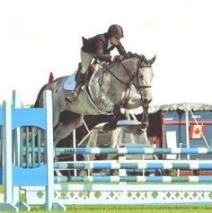MatchnRide - Horses for Sale and Lease - View Horse