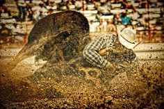 Hittin' The Dirt   Artist  Lincoln Rogers   Medium  Photograph - Photography   Description  A rodeo cowboy and a big steer explode the arena dirt as they hit peak action speed during the steer wrestling event