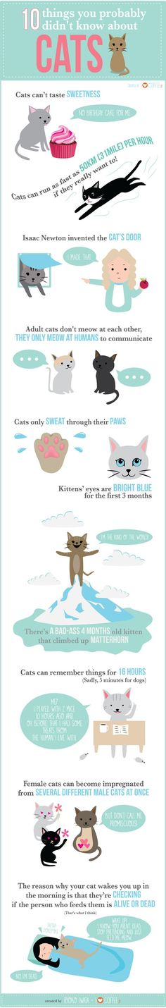 10 Things You Didn't Know About Cats http://catsnation.blogspot.com: