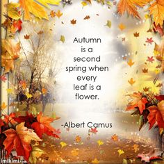 10 Quotes To Get You Ready For The Fall Season quotes autumn fall autumn quotes fall quotes seasonal fall is coming Fall Images, Fall Pictures, Fall Photos, Autumn Day, Hello Autumn, Autumn Leaves, Fall Season Quotes, Fall Is Coming, Autumn Scenes