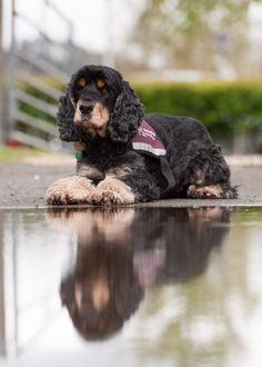 How your donation helps - http://www.hearingdogs.org.uk/donate/how-your-donation-helps