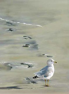 Seagull  enjoying the beach....
