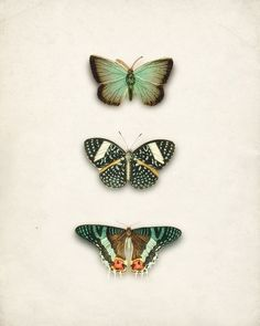 Butterfly_Schmetterlinge http://hippybeachgirl.tumblr.com/post/61218986845