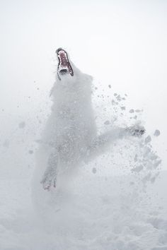 The snow and the beast Photo by Sylvia Michel — National Geographic Your Shot