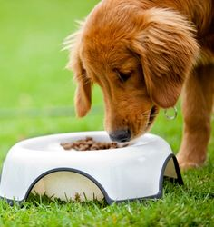 A new way of feeding your furry friend involves breed-specific food. But is it the right choice for your pet?