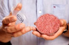 The world's first beef burger created from stem cells has a texture that's closer to cake than steak. Hamburgers, Animal Agriculture, Petri Dish, Food Industry, Stem Cells, Steak, At Least, Food Science, Animaux
