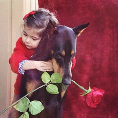 Valentine's Day Love. Little girl and her best friend, a Doberman puppy, holding a rose.