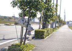 roadside animals