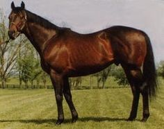 Mari's Book(1978)(Colt) Northern Dancer- Mari Her By Maribeau. 3x4 To Almahmoud. 17 Starts 3 Wins 2 Seconds 5 Thirds. $48,326. 3rd Bayard Tuckerman Jr H, Oil Capitol H. Sire Of Double Booked & Hot Novel(Dam Of Behrens).