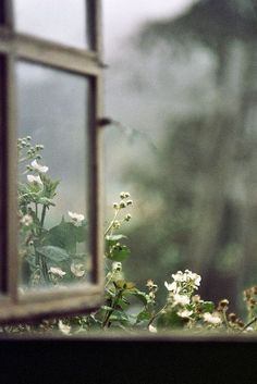 What is a moon garden? A moon garden contains white flowers and silvery foliage that seem to sparkle and reflect light. I wanted to keep thi. Window View, Open Window, Vie Simple, Moon Garden, All Nature, Flowers Nature, Spring Flowers, Through The Window, Foto Art
