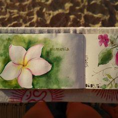 Plumeria flower watercolor sketch